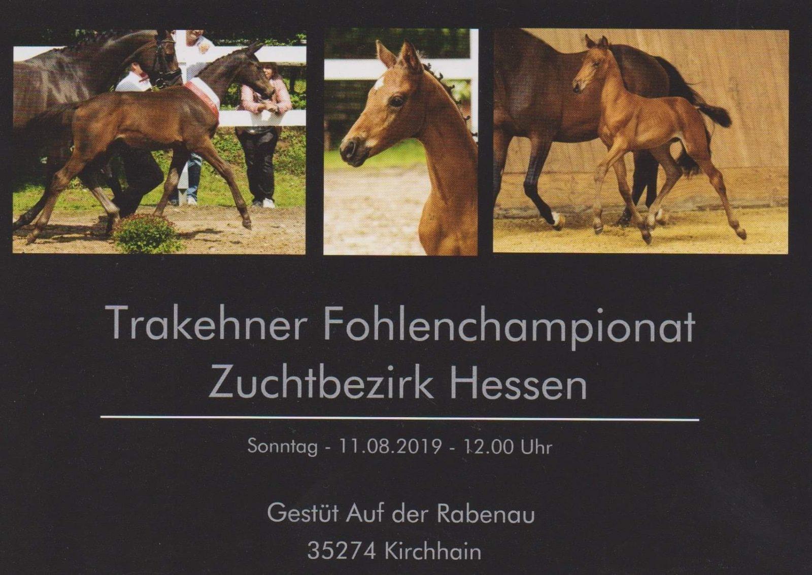Trakehner Zuchtbezirk Hessen